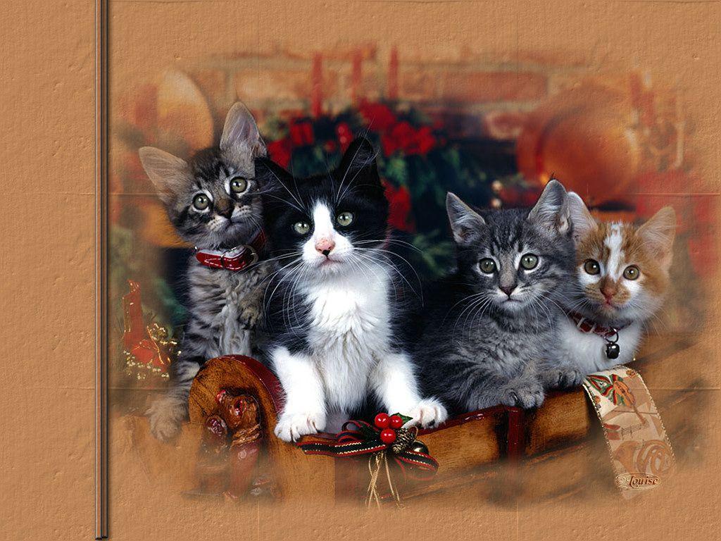 Fond d cran gratuit animaux chats et chiens fabulous for Fond ecran gratuit animaux